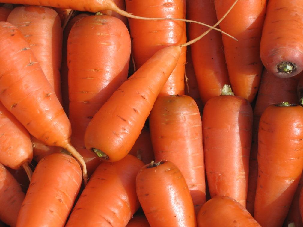 сорт моркови каротель