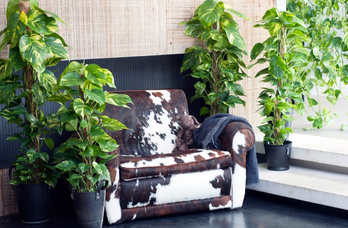 Растение в интерьере