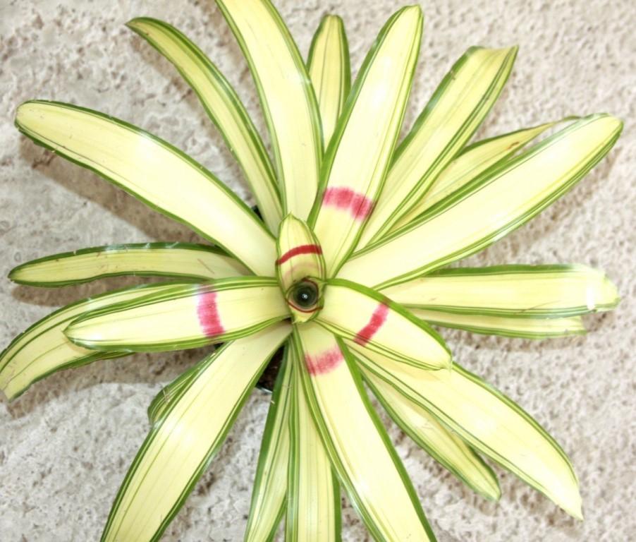 неорелегия зеленый ниндзя