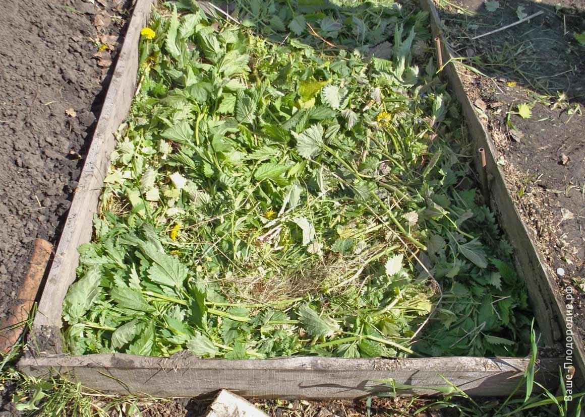 теплая грядка со свежескошенной травой