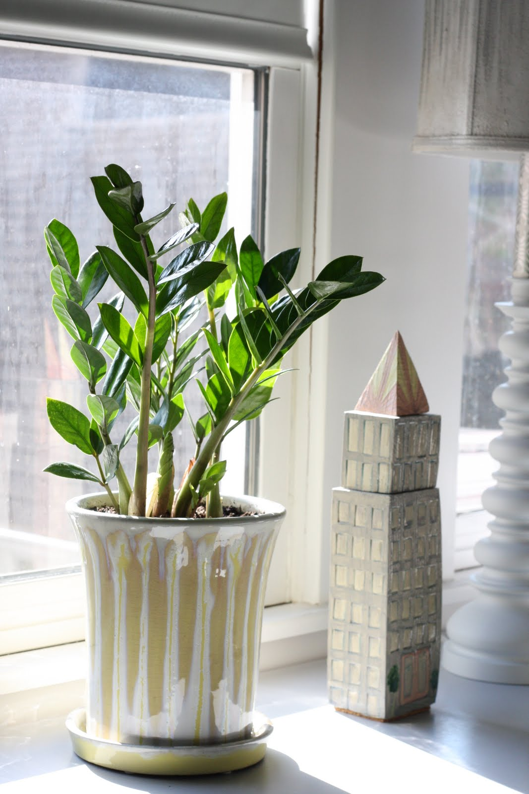Замиокулькас на окне