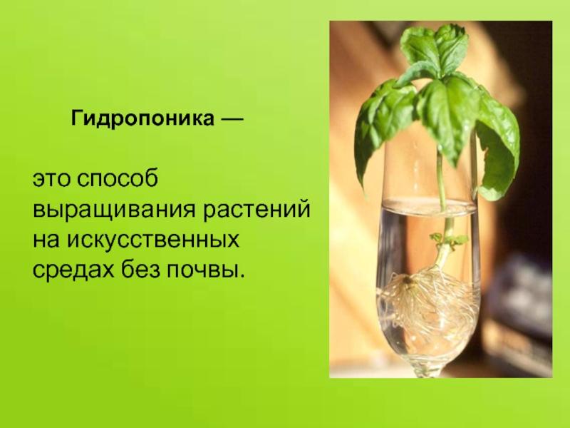 Гидропоника для жасмина