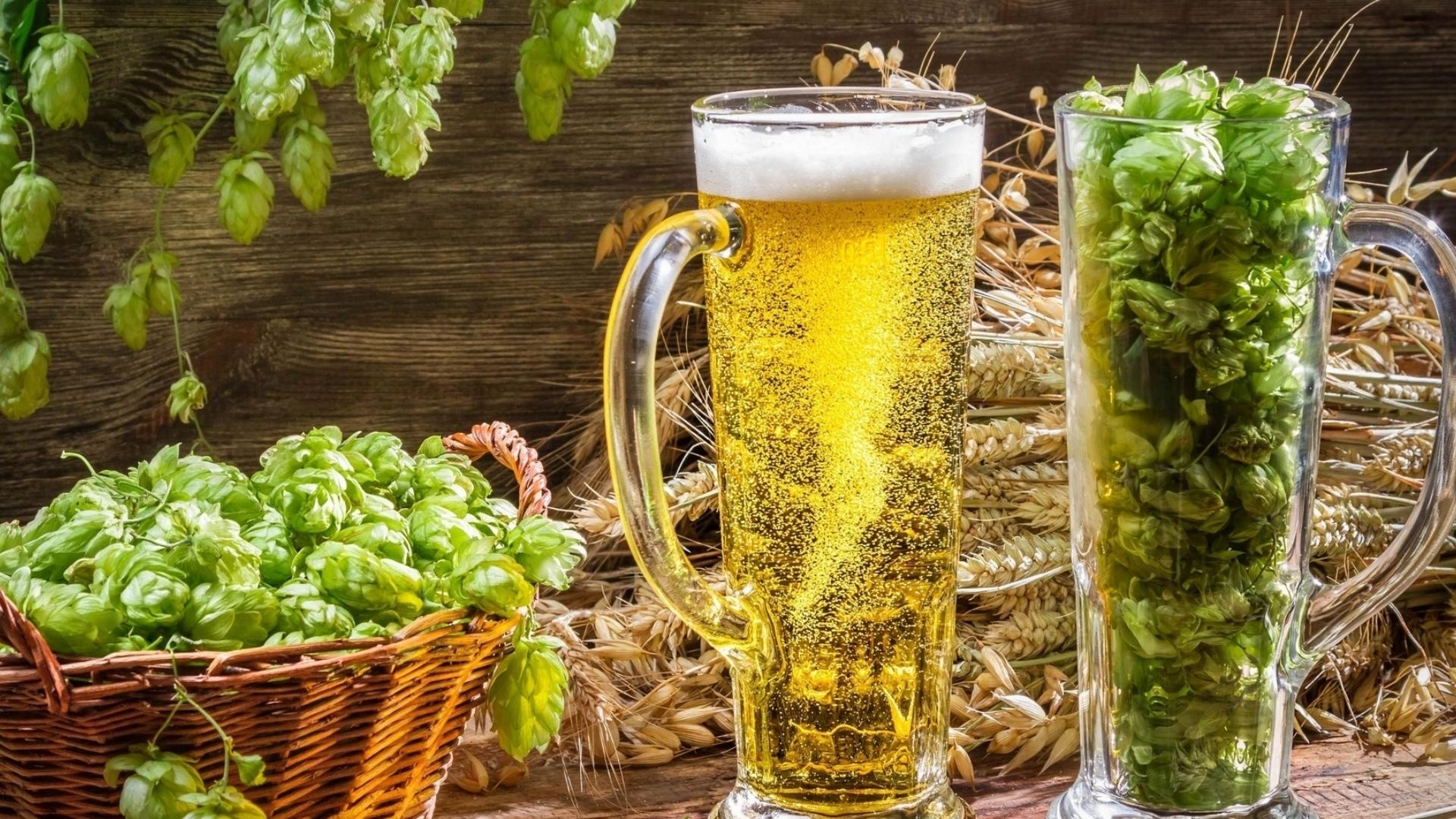 Хмель для изготовления пива